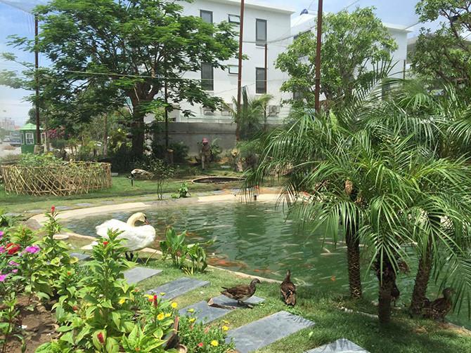 Hồ cá trong vườn chim