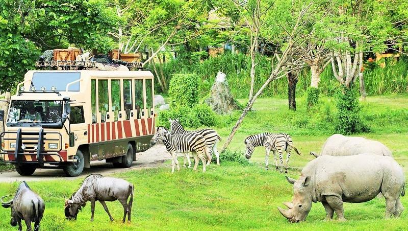 Tham quan flc Zoo Safari Park quy nhơn