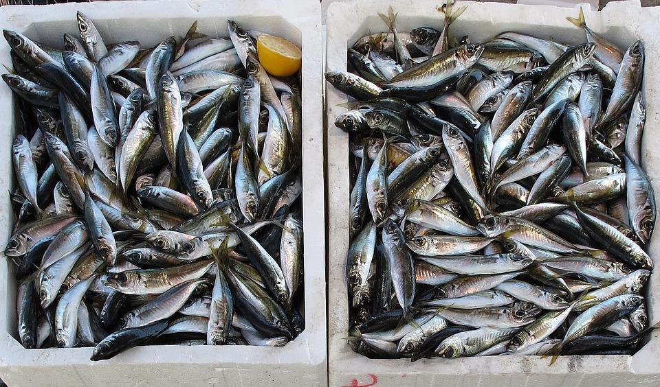cá biển - ăn hải sản ngon rẻ ở Sầm Sơn
