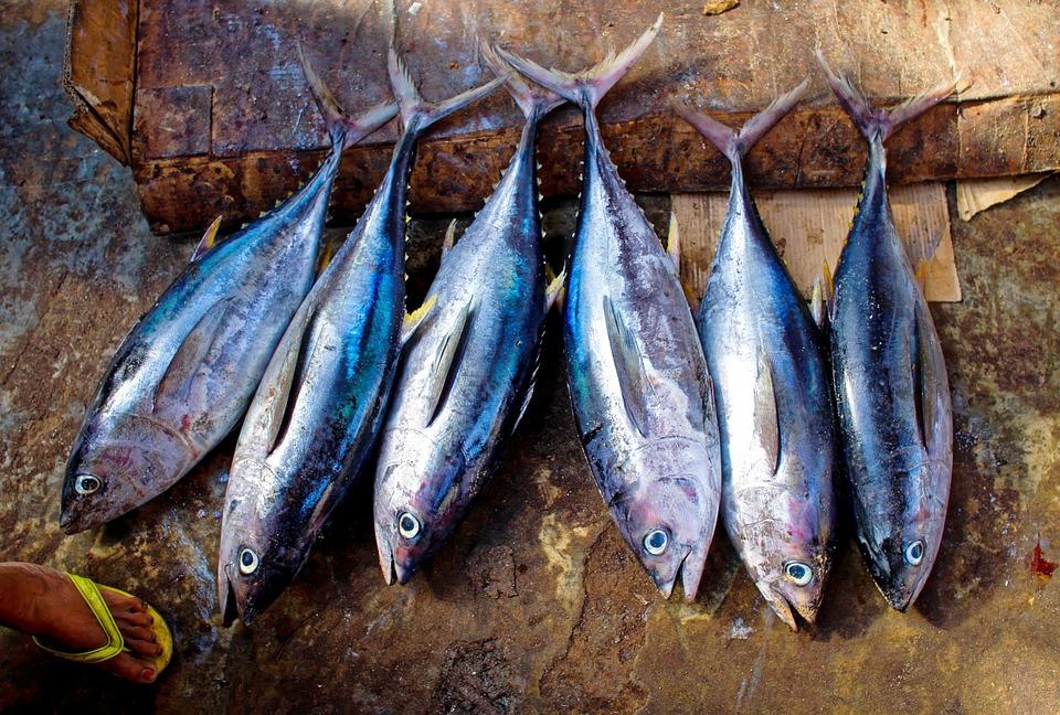 hải sản cá thu