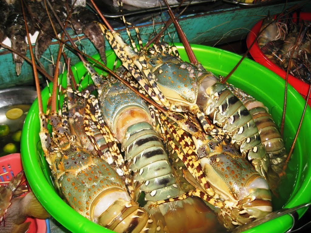 Các khu chợ hải sản Sầm Sơn